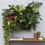living wall planter indoor outdoor use w reservoir color chocolate