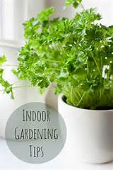 indoor gardening tips gardening pinterest