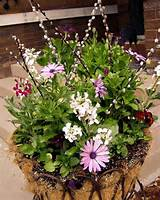 Spring Potted Planter Ideas | Plants And Flowers | Pinterest