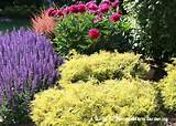 GUIDE TO NORTHEASTERN GARDENING: February 2012