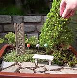 ... Mini Garden Trees | The Mini Garden Guru - Your Miniature Garden