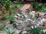 cactus rock garden ideas