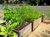 Container Vegetable Gardening | Gardening | Pinterest