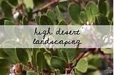 high desert landscaping1 jpg