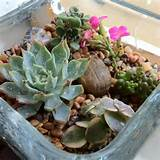 Mini succulent garden | Gardening Ideas | Pinterest