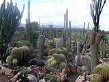 Sheilam Cactus Garden (South Africa)