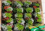 ... Inspirations > Container Gardening > Vertical Container Growing Ideas
