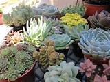 Succulent Garden Arrangement | FaveCrafts.com