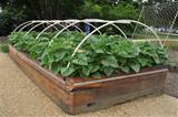 photo gallery of the about raised bed vegetable gardening ideas