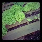 Pallet gardening | Pallet garden ideas | Pinterest