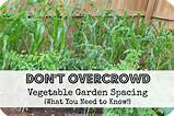 vegetable gardening vegetable garden layout option block style
