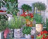Recycled tin herb garden! | Garden Ideas | Pinterest