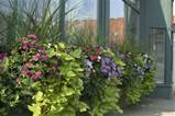 even in an urban setting window boxes and container plants attract