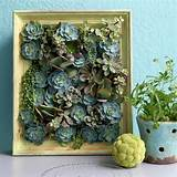 Unique Living Succulent Picture Frame Planter