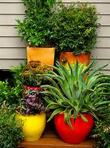 Here are two great ideas using pots for indoor or outdoor living wall ...