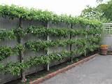 10 Creative Fence Designs | Master Garden