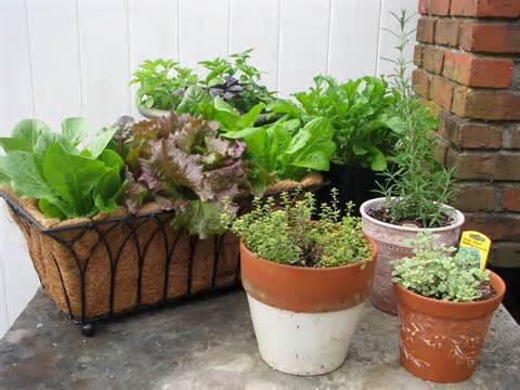 gardener easy container gardening combining herbs and vegetables
