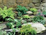 make a shady rock garden landscaping ideas and hardscape design
