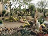 ... Designs Ideas for Small Yards: Cactus Desert Landscaping Designs Ideas