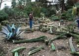 Vandals destroy cacti at Melbourne Botanic Garden - GardenDrum