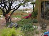 back yard landscaping ideas tucson az