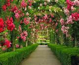 Rose graden pathways idea; Rose garden idea; home gardening; gardening ...
