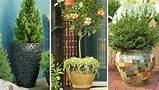 gardening ideas porch plants shrub you pot plants outdoor potted
