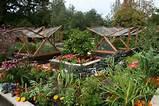 Ein Gemüsegarten im Herbst: Wie Sie ihn am besten darauf vorbereiten