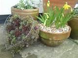 Spring pots.