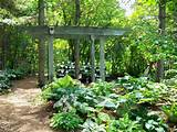 this gazebo shades the miniature hostas for sale