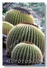 Cactus | cactus garden ideas | Pinterest