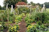 Small Vegetable Garden Design Ideas - How to Plan a Garden