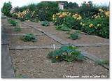 wooden walkway around vegetables | vegetable garden | Pinterest