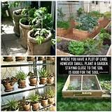 Small garden ideas!