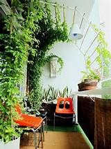 Build a curved canopy for a vine to grow on and create privacy and ...