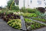 Backyard Vegetable Garden Ideas School Garden Backyard Vegetable ...