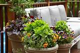 Dream Home Container Plantings - Armonk, NY - Eclectic - Landscape ...