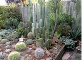 ... Desert Yardscape | Pinterest | Cacti Garden, Cactus and Garden Ideas