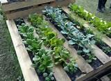 Pallet gardening | Crafty Ideas | Pinterest