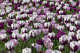 Ideas, Bulb Combinations, Plant Combinations, Flowerbeds Ideas, Spring ...