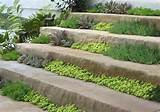 ... Walkway Ideas http://beautifullandscapingideas.net/walkway-ideas