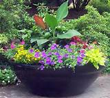 Large Container Gardening | Container gardening for zone 7 | Pinterest