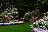 For a rhododendron and azalea garden, plan the