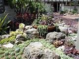 cactus garden sherman library gardens