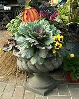 grow a 1 fall container garden on a 99 gardener budget treehugger