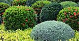 Shrubs for Shade: Gardens Ideas, Canadian Gardens, Outdoor Ideas ...