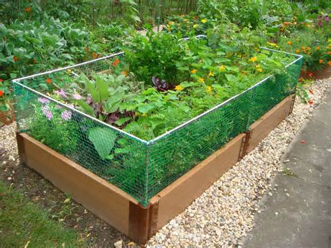 alternative gardning raised bed rabbit fence