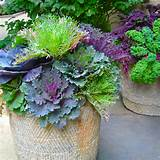 Midwest Gardening: Flowerpots for Fall