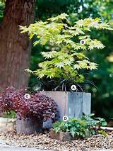 container garden recipes for shade