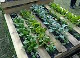pallet vegetable garden diy ideas pinterest